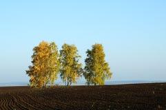 Einsamer Baum auf Feld mit gemähtem Gras Stockfoto