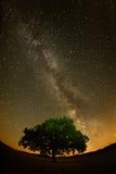 Einsamer Baum auf Feld unter dem nächtlichen Himmel Lizenzfreies Stockfoto
