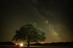 Einsamer Baum auf Feld unter dem nächtlichen Himmel Lizenzfreies Stockbild