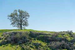 Einsamer Baum auf Felsen und grüner Landschaft Stockbild