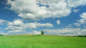 Einsamer Baum auf grünem Feld gegen Hintergrund des blauen Himmels stock video
