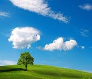Einsamer Baum auf grünem Hügel lizenzfreies stockbild