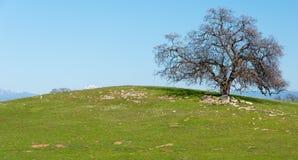 Einsamer Baum auf grünem Hügel Stockfotos