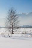 Einsamer Baum auf schneebedecktem Feld Stockfotografie