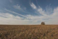 Einsamer Baum auf Sommerfeld am sonnigen Tag - gestalten Sie mit Wiese und Himmel landschaftlich Stockfotografie