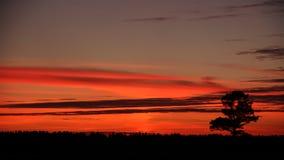 Einsamer Baum auf Sonnenunterganghintergrund stockbilder