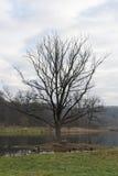 Einsamer Baum auf Sumpf Lizenzfreie Stockfotos