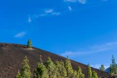 Einsamer Baum auf Vulkanbergen Teneriffa, Spanien Lizenzfreie Stockfotos