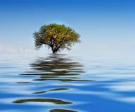 Einsamer Baum auf Wasser stockfoto