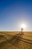 Einsamer Baum bei Sonnenaufgang Stockfoto