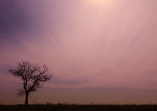 Einsamer Baum bei Sonnenuntergang Stockfotos