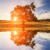 Einsamer Baum bei Sonnenuntergang in den Bergen Stockfotos