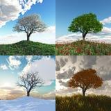 Einsamer Baum bei Zeitspanne mit vier Jahreszeiten Lizenzfreies Stockbild