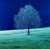 Einsamer Baum bis zum Nacht Stockfotos