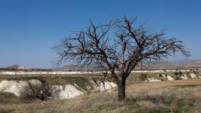 Einsamer Baum in Cappadocia Lizenzfreie Stockfotos