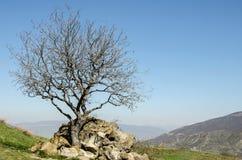 Einsamer Baum in den Bergen Stockfotos