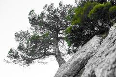 Einsamer Baum in den felsigen Bergen, als Symbol von Ausdauer und Vitalität in den schwierigen Lebensbedingungen Ein Baum mögen lizenzfreies stockfoto