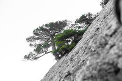 Einsamer Baum in den felsigen Bergen, als Symbol von Ausdauer und Vitalität in den schwierigen Lebensbedingungen Ein Baum mögen lizenzfreies stockbild