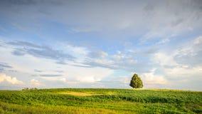 Einsamer Baum an den grenzenlosen sonnigen Feldern stockbild