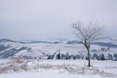 Einsamer Baum in den Winterbergen Stockfotos