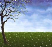 Einsamer Baum, der auf der Sommerwiese wächst Stockbilder