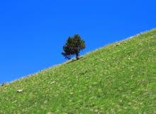 Einsamer Baum, der auf der Steigung wächst Stockbilder