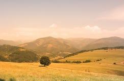 Einsamer Baum, der die Berge gegenüberstellt lizenzfreies stockbild