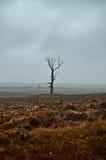 Einsamer Baum in der drastischen Landschaft lizenzfreie stockbilder