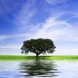 Einsamer Baum in der landwirtschaftlichen Landschaft mit Wasserreflex Lizenzfreie Stockfotos