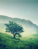 Einsamer Baum in der Nacht Lizenzfreie Stockfotos