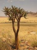 Einsamer Baum in der namibischen Wüste Lizenzfreie Stockfotografie
