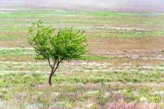 Einsamer Baum in der schönen Landschaft der Steppe Lizenzfreie Stockfotografie
