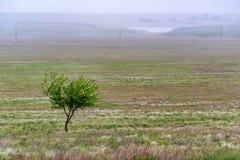 Einsamer Baum in der schönen Landschaft der Steppe Lizenzfreie Stockbilder