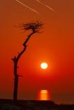 Einsamer Baum an der Seeküste auf einem Sonnenunterganghintergrund Stockfoto
