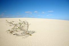 Einsamer Baum in der Wüste Lizenzfreie Stockfotografie