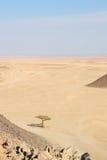 Einsamer Baum in der Wüste Lizenzfreies Stockfoto
