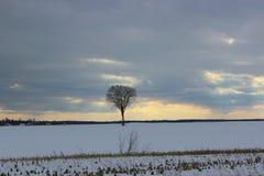 Einsamer Baum in der Winterlandschaft Stockbilder