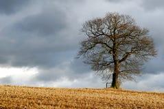 Einsamer Baum in der winterlichen Landschaft Lizenzfreie Stockbilder