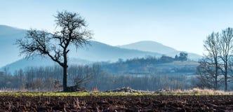 Einsamer Baum des Herbstes auf dem Gebiet Lizenzfreie Stockfotografie