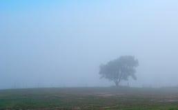 einsamer Baum des Tiefstands im Nebel   Lizenzfreie Stockfotografie