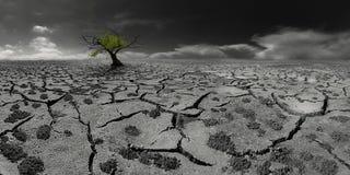 Einsamer Baum in einer Beitrag-apokalyptischen Wüstenlandschaft Lizenzfreie Stockfotografie