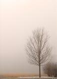 Einsamer Baum eingehüllt in Nebel an einem Tag des Winters stockfotografie