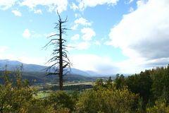 Einsamer Baum, EL Bolsón Lizenzfreie Stockfotos
