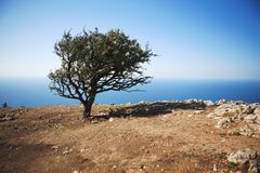 Einsamer Baum gegen das Meer Stockfotos