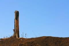einsamer Baum gegen den Himmel Stockbilder