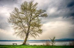 Einsamer Baum gegen stürmischen Himmel Stockfoto
