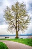 Einsamer Baum gegen stürmischen Himmel Lizenzfreie Stockfotografie