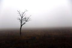 Einsamer Baum am Herbsttag Lizenzfreies Stockfoto