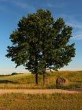 Einsamer Baum-Hintergrund Stockbild