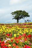 Einsamer Baum im Blumengarten Lizenzfreie Stockfotografie